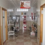 Sala gatos Hospital Veterinario Cruz Cubierta