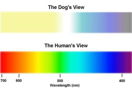 Vista en perros