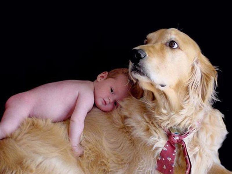 bebes y mascotas