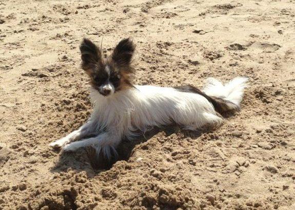 playas españolas que admiten perros