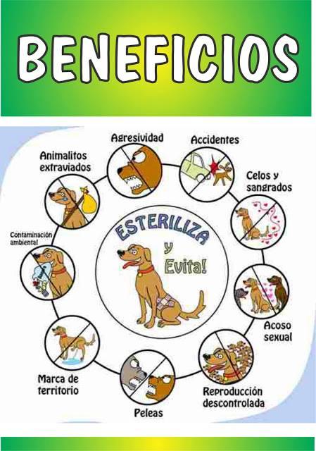 beneficios esterilización