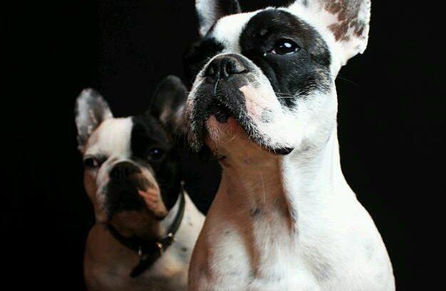 lenguaje corporal de los perros