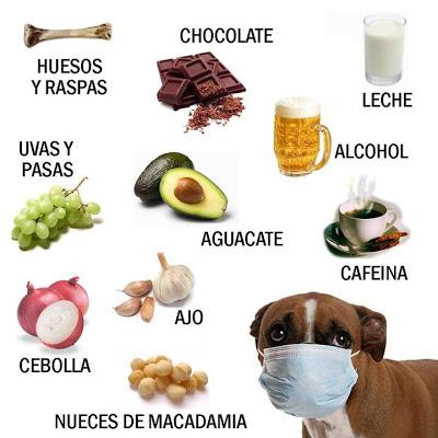 alimentos tóxicos perros y gatos