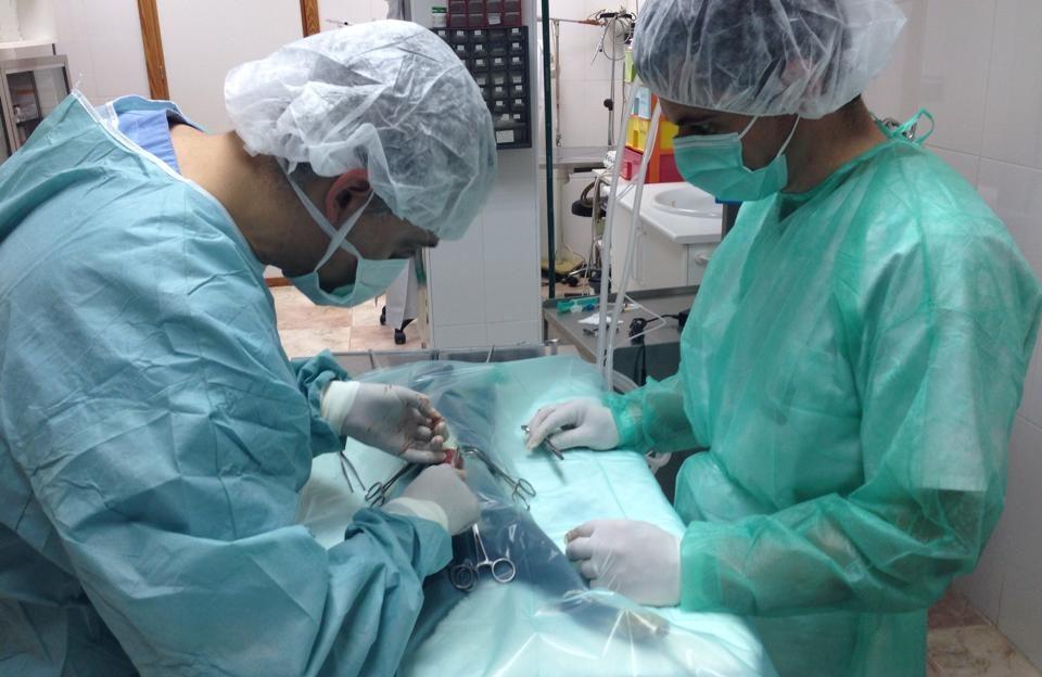 esterilización gata foto quirofano