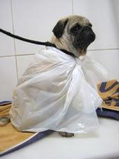 spa para perros y gatos
