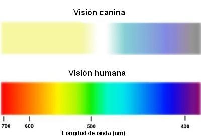 Visión perros - humanos