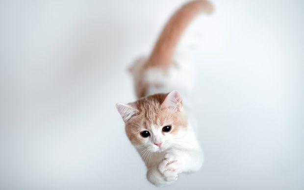 gatos paracaidistas