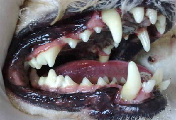 limpieza de boca ultrasonidos