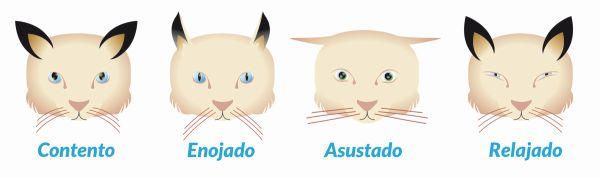 gato expresiones faciales