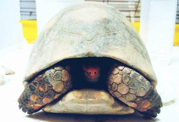 Errores más frecuentes con reptiles