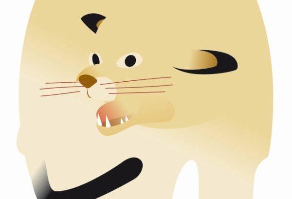 Agresividad felina