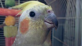 alimentos peligrosos para aves