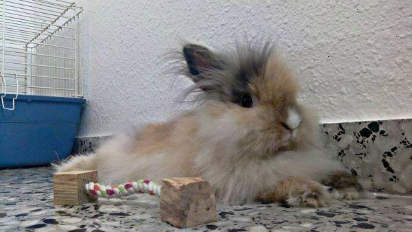 consejos para los golpes de calor en conejos cobayas y chinchillas