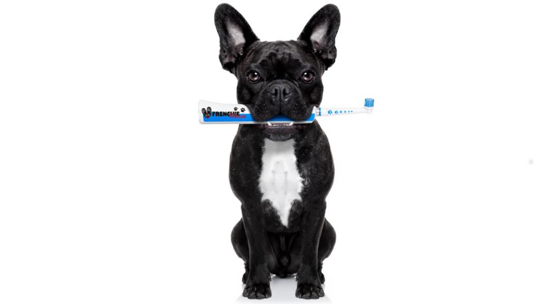 Enfermedad periodontal en perros y gatos