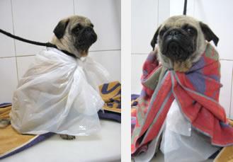 caso sarna en perro