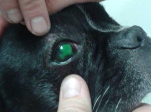 Tratamiento quirúrgico de úlcera corneal