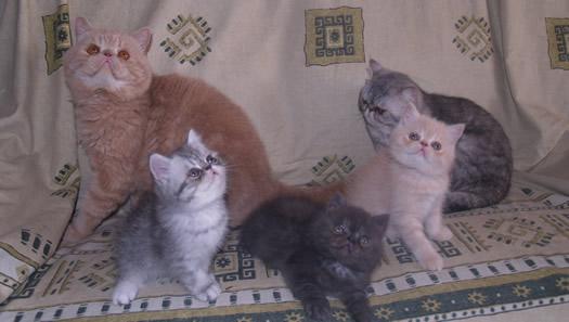 gestación en gatas