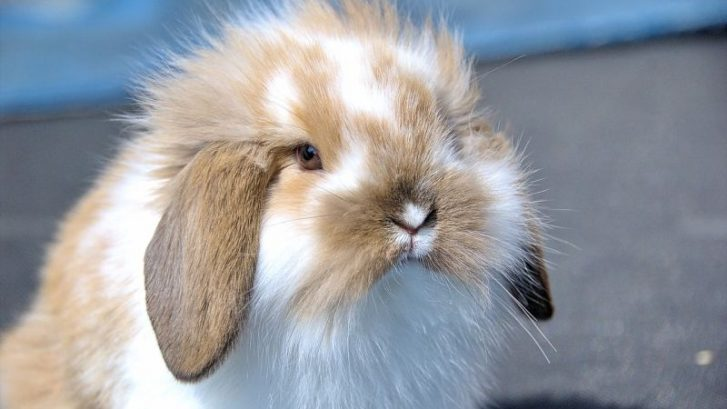 conejos geriatricos