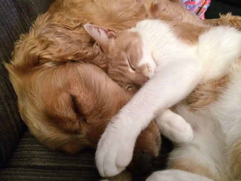 consulta canina y felina
