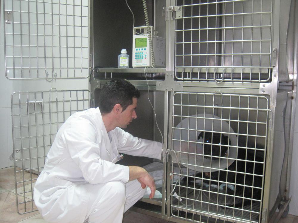 hospitalizacion - Hospital veterinario Cruz Cubierta