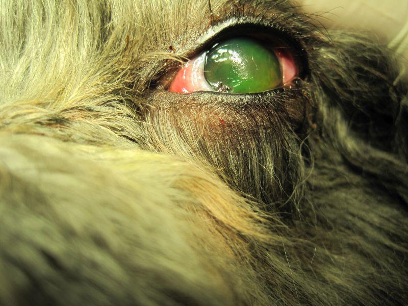 oftalmología web