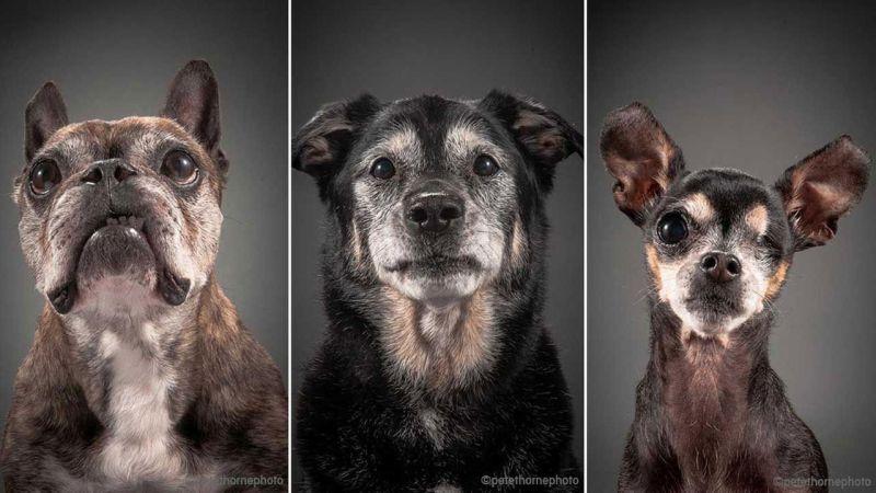 revisiones veterinarias perros y gatos geriátricos