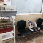 Rincón del gato - Hospital Veterinario Cruz Cubierta