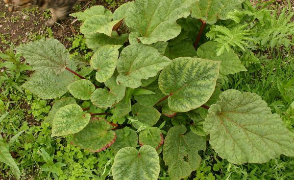 plantas toxicas conejos