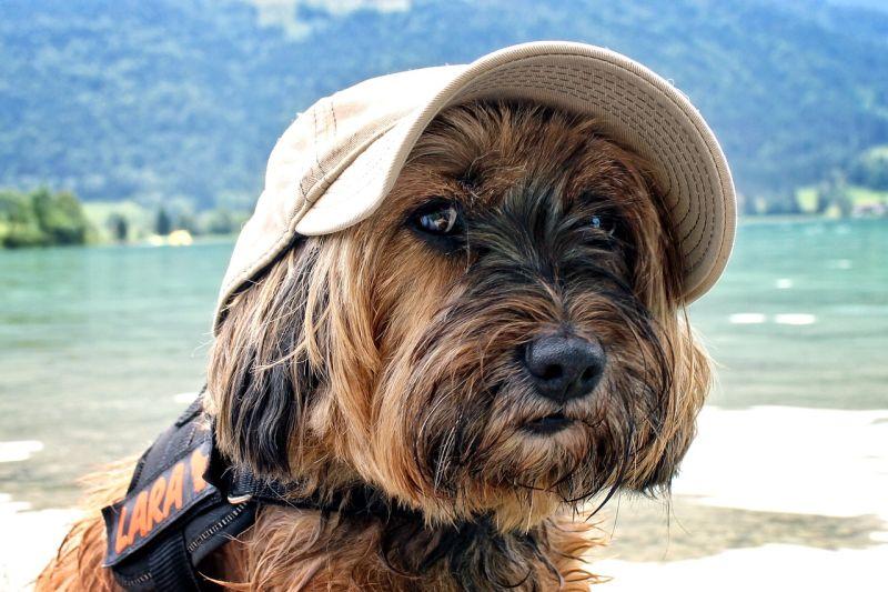 mascotas en vacaciones