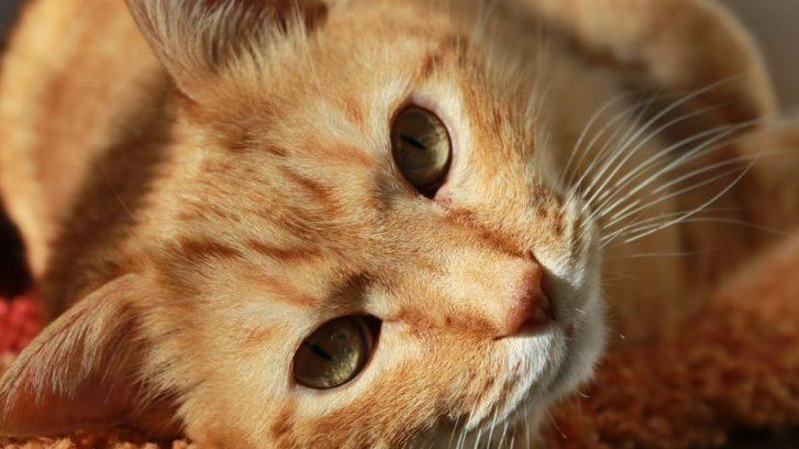 bandeja de arena del gato