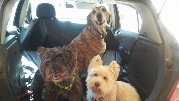 mareo de los perros en coche