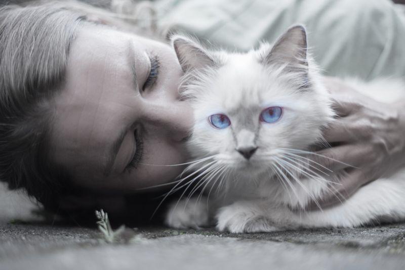 gatos, toxoplasmosis y embarazo