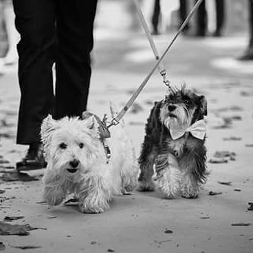 mis perras en el día de mi boda