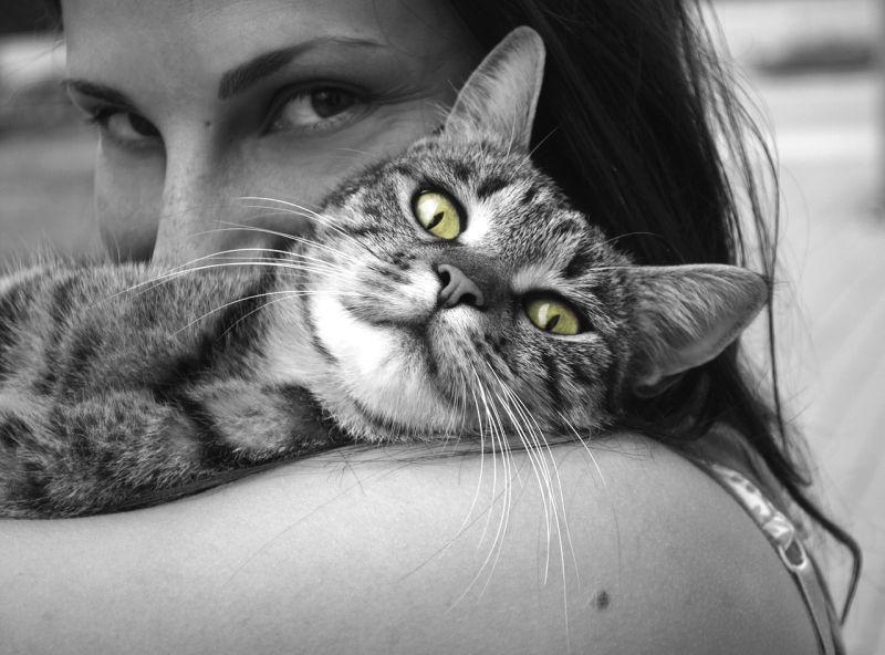 beneficios de tener gato