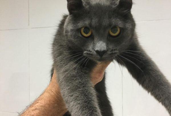 neumotorax y factura distal de femur en gato