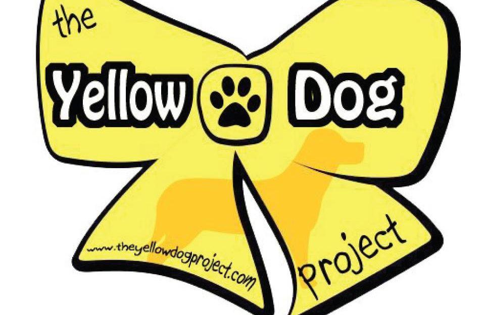 lazo amarillo en los perros