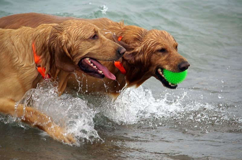 playas para perros 2017
