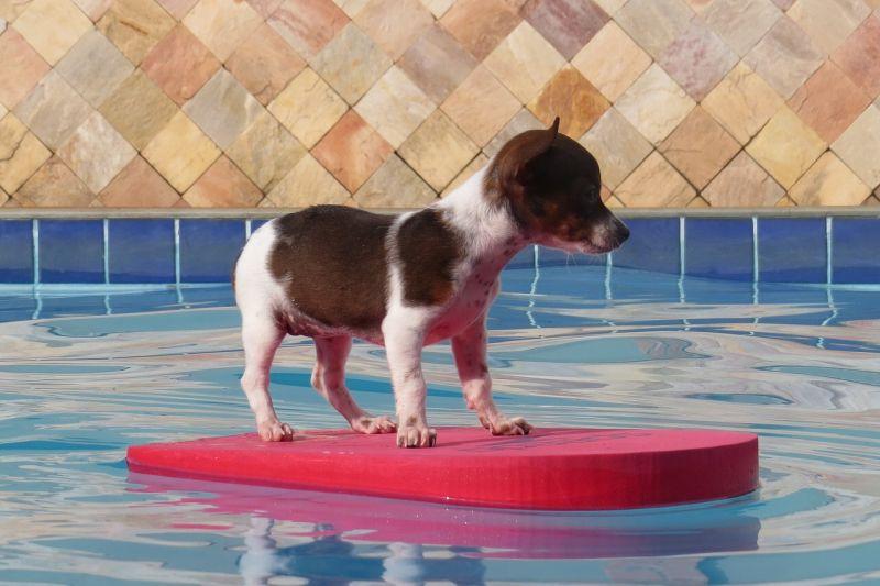 planes con tu perro para este verano