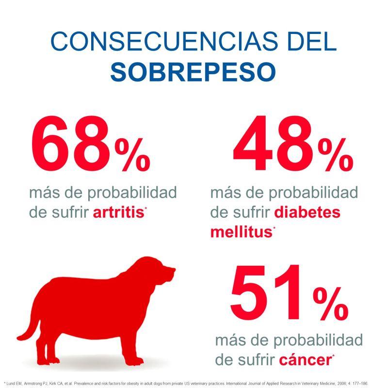 sobrepeso perro