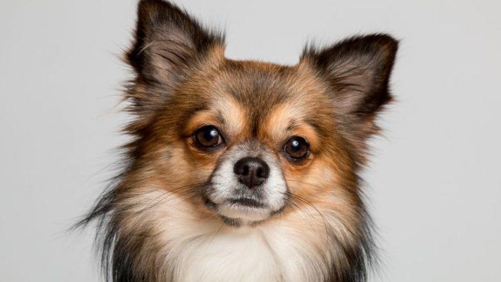 nueva ley sobre animales de compañia