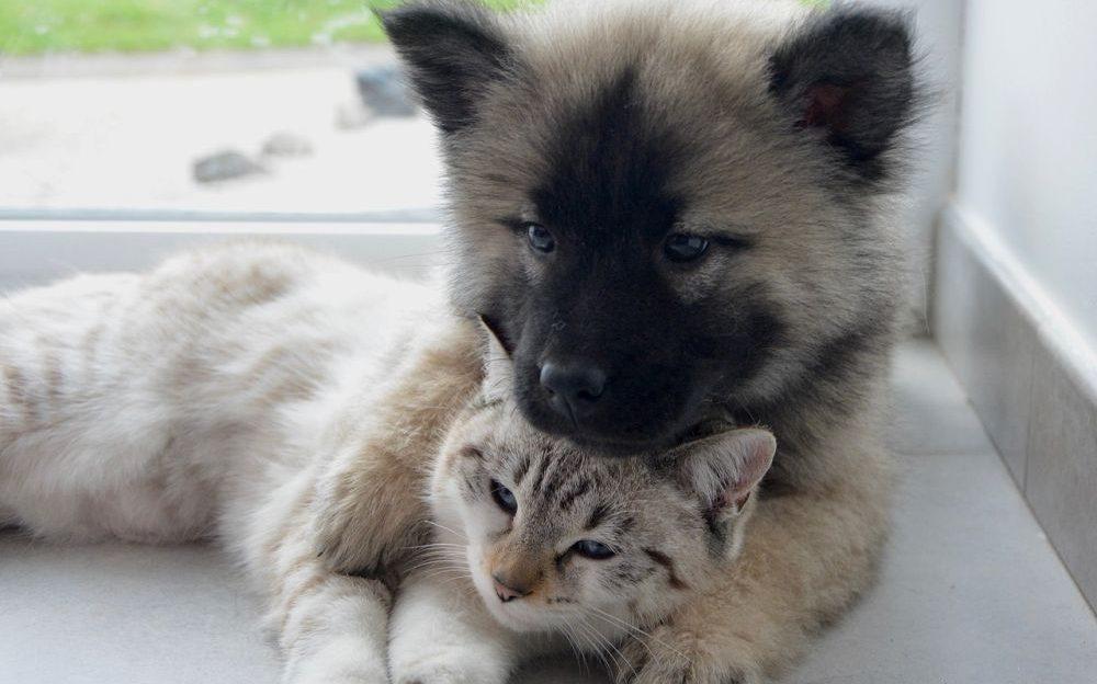 campaña de esterilización de mascotas