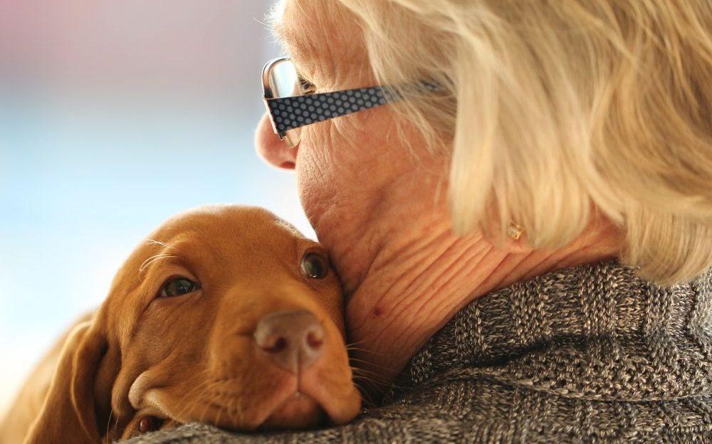 mascotas en terapias de alzheimer