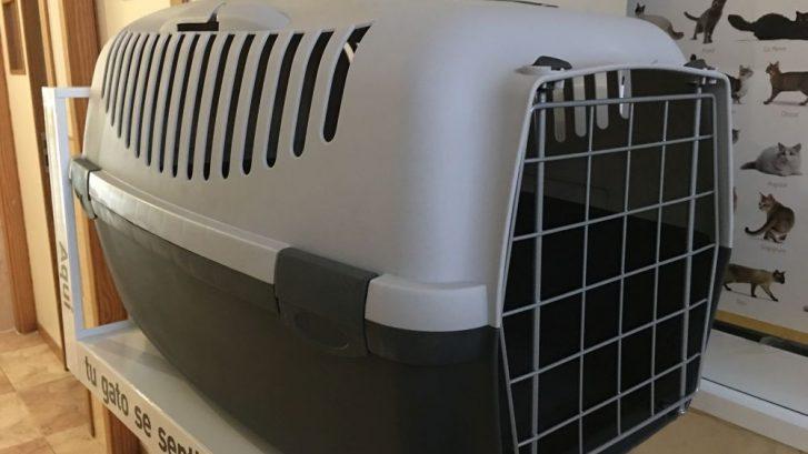 transportar un gato en coche