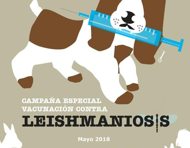 campaña de vacunación de leishmaniosis