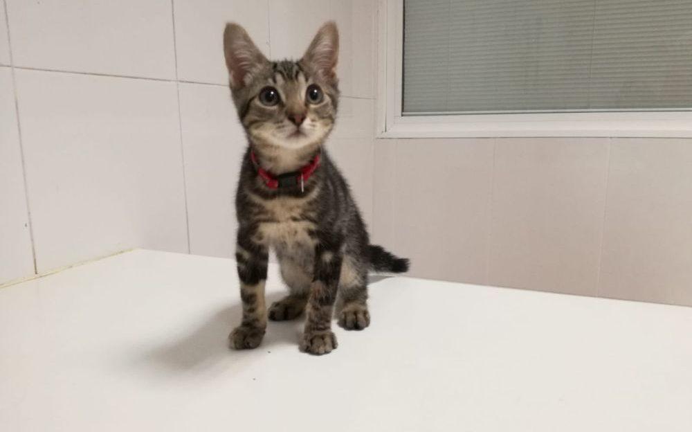 leucemia e inmunodeficiencia en gatos