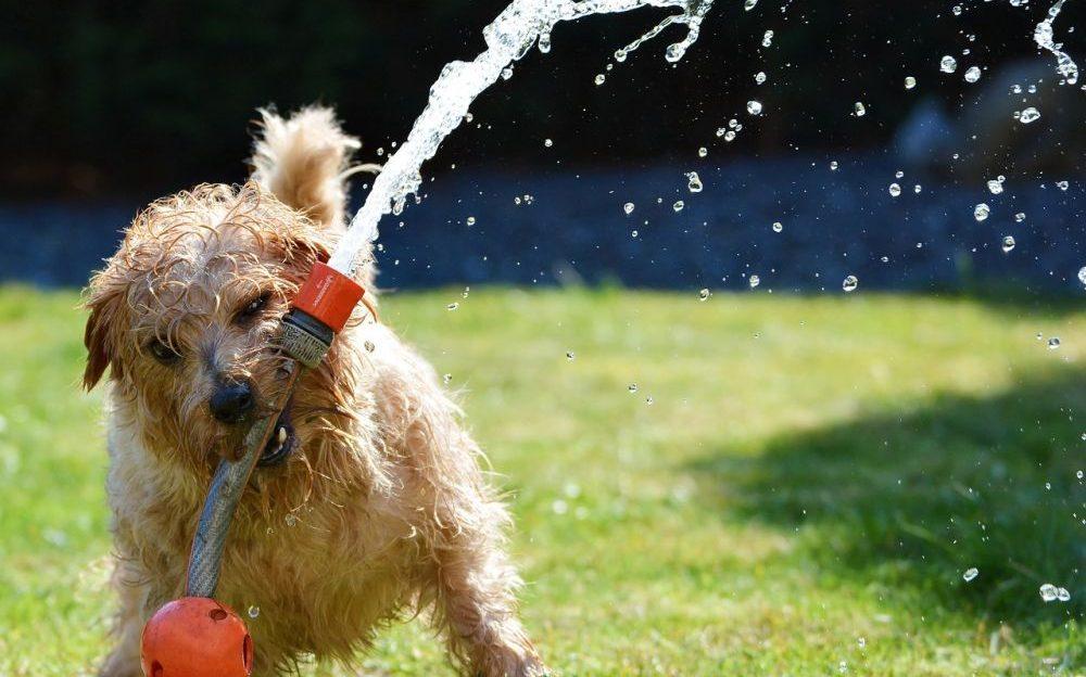 refrescar a tu perro