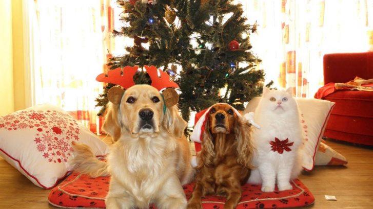 cuidado de tu mascota esta navidad