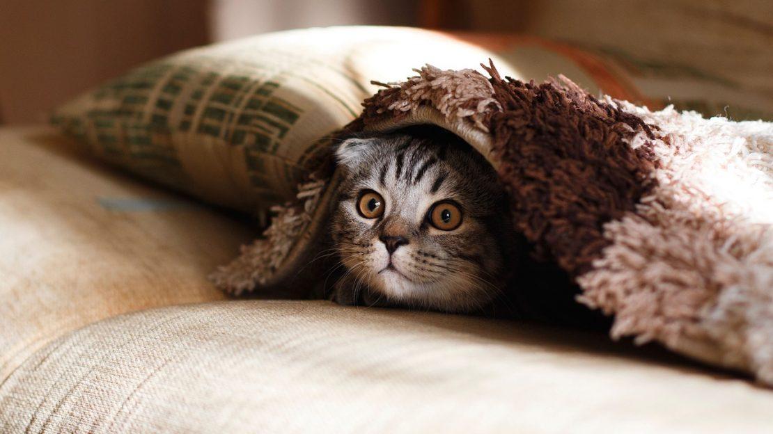 cuidar a tu gato del frío