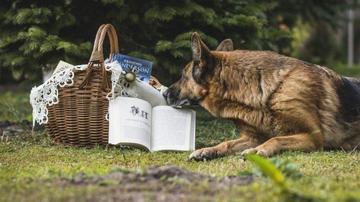 educación canina