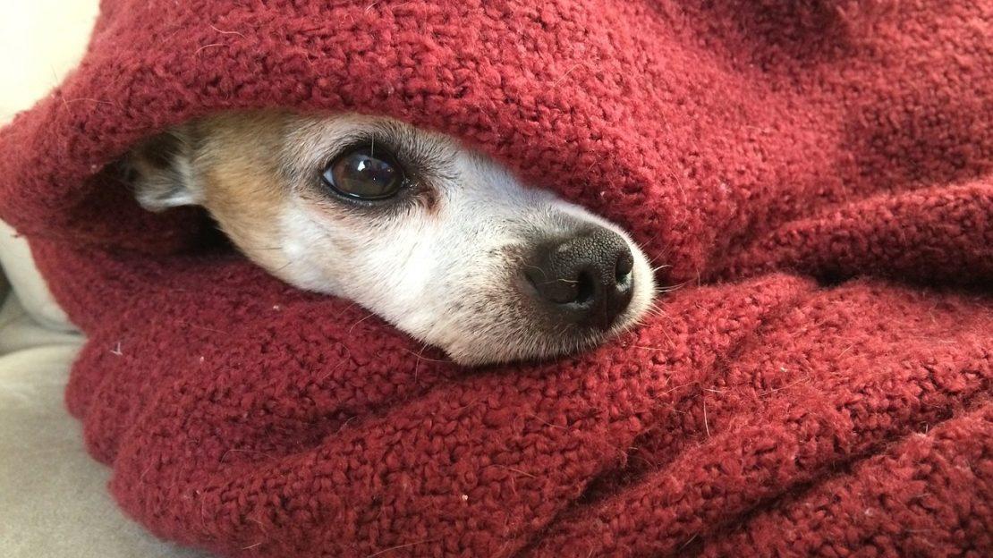 los perros y el frío